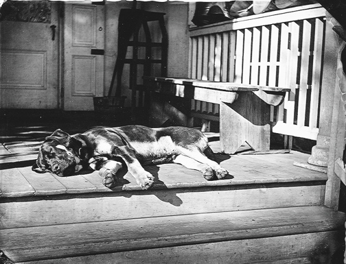 old dog porch